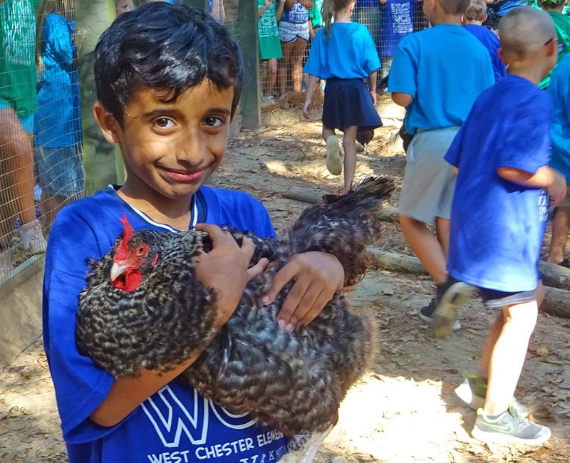 Young boy in blue t-shirt smiling while holding a rooster
